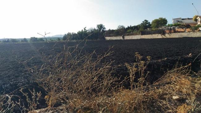 El fuego ha calcinado una zona de trigo.