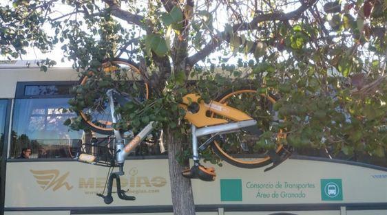 Bici de Obike colgada de un árbol.