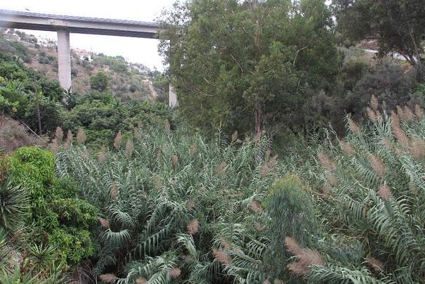Rambla de Cotobro, cubierta por vegetación.