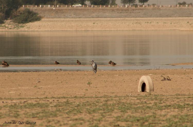 Aspecto actual del embalse del Cubillas, uno de los que más agua ha perdido en el último año.