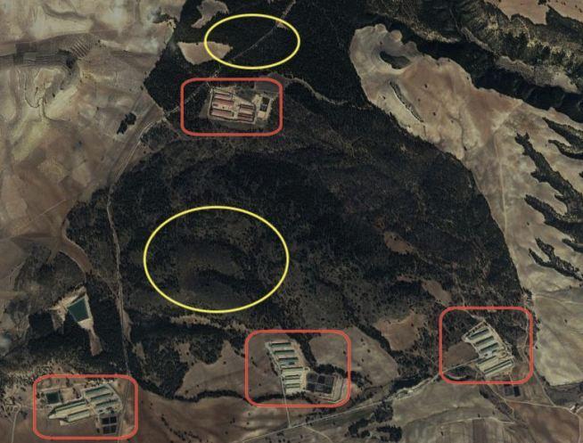 Imagen desde Google Earth donde se ven las zona de destrucción de nidos (en amarillo) y las granjas de Cefusa-El Pozo que rodean el pinar (en rojo).