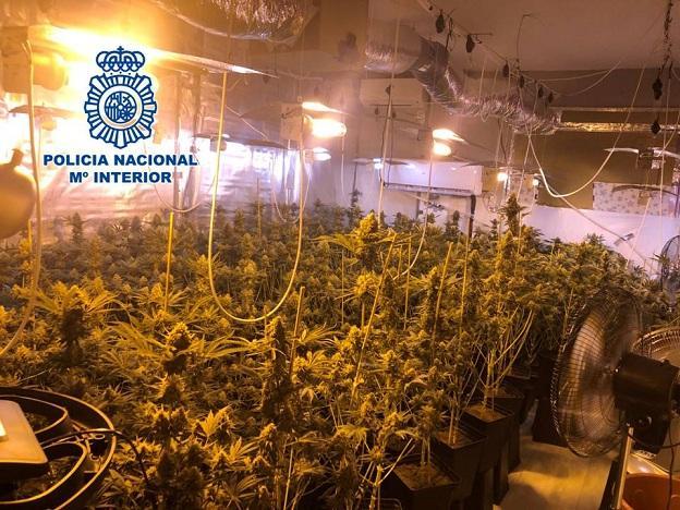 Una de las habitaciones dedicadas al cultivo de marihuana.