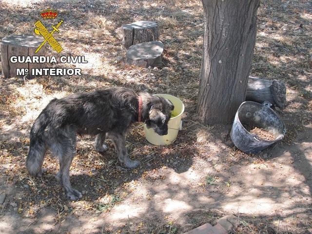 Uno de los dos perros que tenía abandonados.