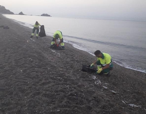 Operarios de limpieza recoge peces muertos en la orilla.