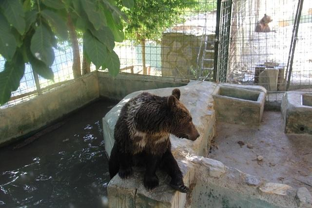Uno de los osos del parque de Peña Escrita.