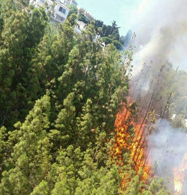 Las llamas, cerca de viviendas.