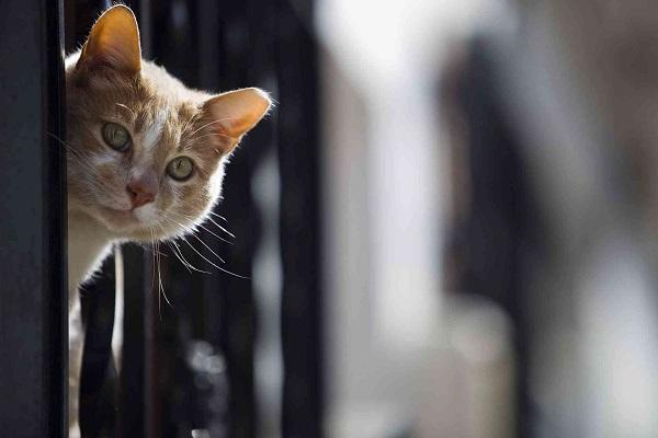 El Ayuntamiento trabaja en la regulación de las colonias de gatos ferales.