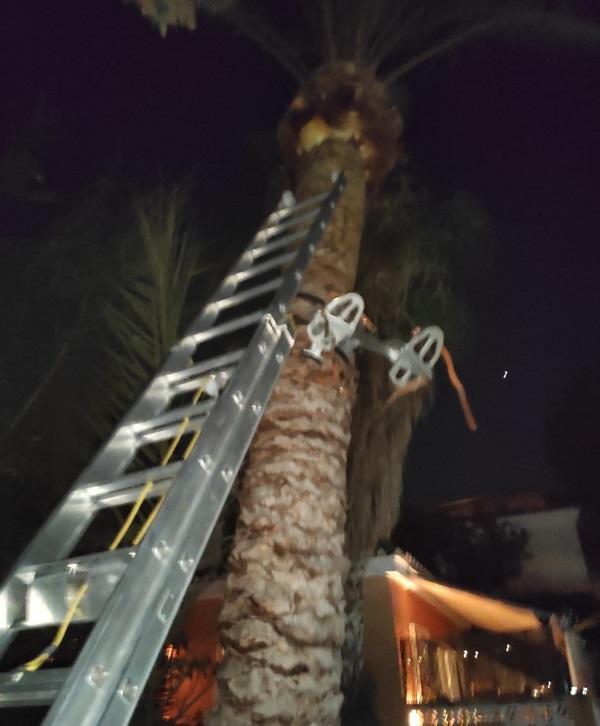 El accidente ocurrió mientras limpiaba una palmera.