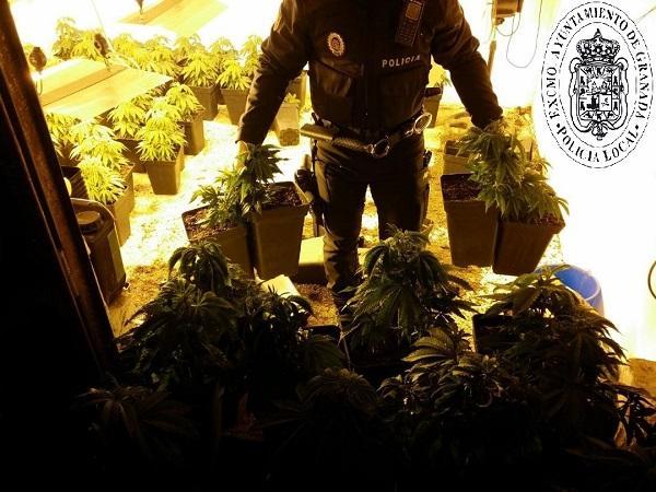 En total se intervinieron 112 plantas de marihuana.