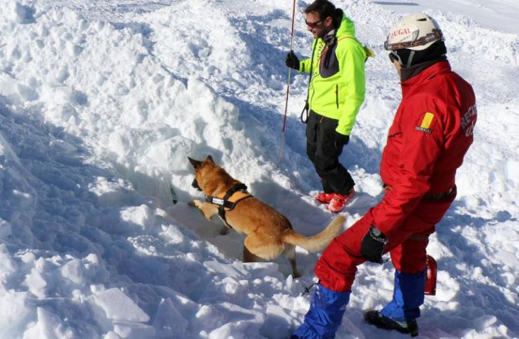Thor, perro rescatador de Sierra Nevada, en acción.