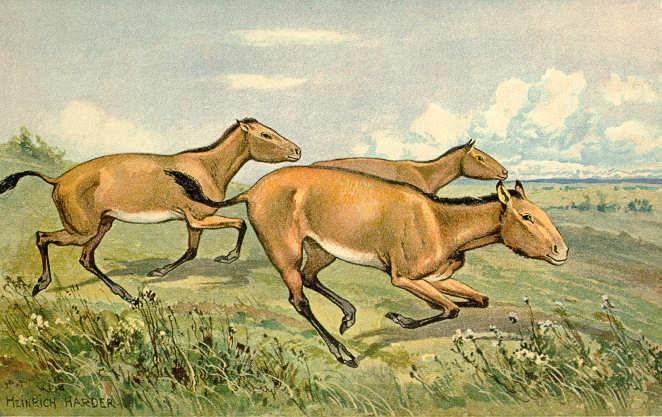Iustraciones de caballitos prehistóricos hipparion, del que se han hallado restos en Baza.