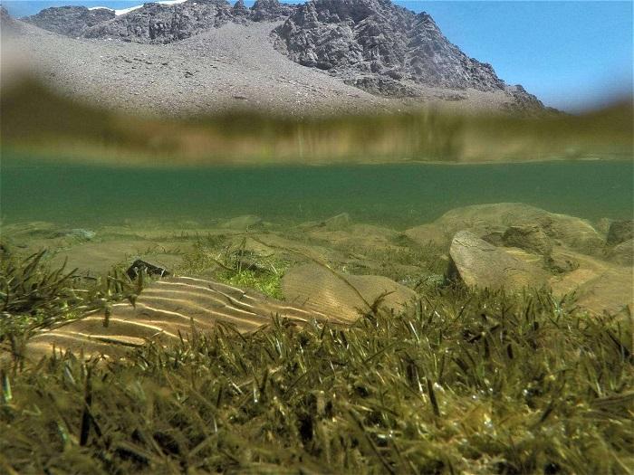 Impactante imagen de la Laguna de Nájera, que muestra la vegetación sumergida tras el deshielo.