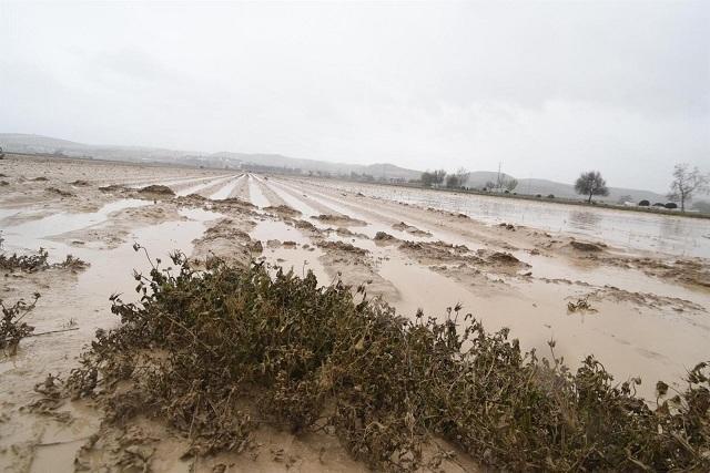 Terrenos agrícolas inundados en la Vega.