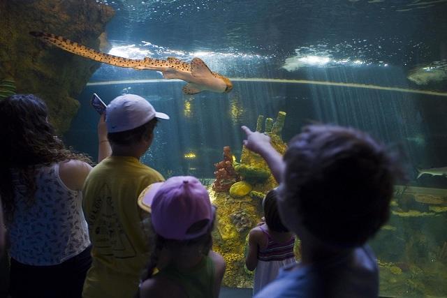 El 18% de visitantes del museo es del extranjero.
