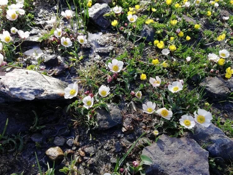 En Sierra Nevada hay rocas, nieve, agua, flores...es un lugar único.