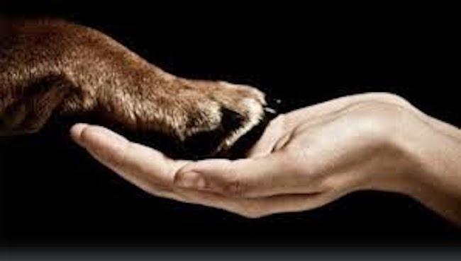CONCIENCIA EN LOS ANIMALES EBOOK