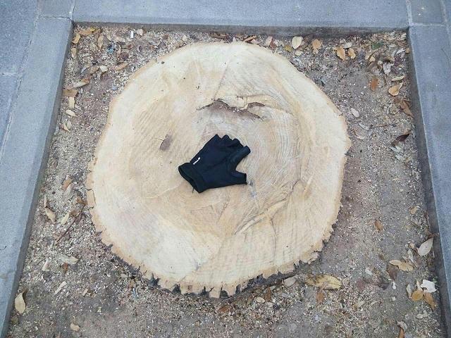 Uno de los árboles talados en la capital.