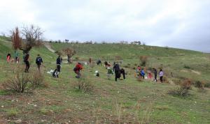 Una treintena de personas han participado en la reforestación.