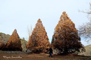 Imagen tomada por Proyecto Sierra de Baza el 17 de febrero.