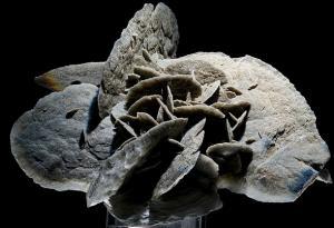 La exposición de minerales será en el Paseo de San Cristóbal.