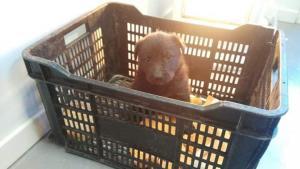 El cachorro recuperado por los agentes de la Policía Local.