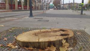 Uno de los árboles centenarios talados, junto a la vía y parada del Metro.