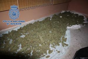 Marihuana intervenida en la vivienda de los detenidos.