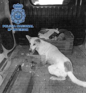 El disparo provocó lesiones tan graves que fue necesario amputarle una pata al perro.