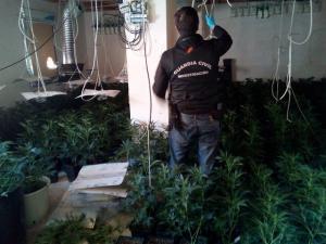 Un agente examina la conexión ilegal de luz de una de las plantaciones.