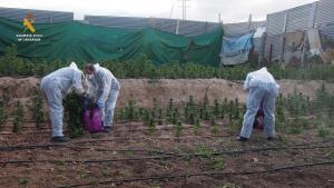 Intervención de marihuana en Atarfe en la operación Rotavátor 2.