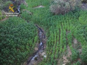 Plantación de marihuana en Cáñar.