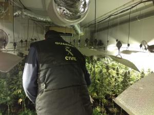 Un agente inspecciona una de las habitaciones con marihuana.