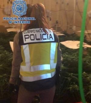 Una agente, en una de las plantaciones.