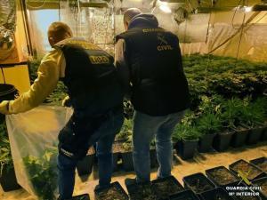 La banda contaban también con plantaciones de marihuana.