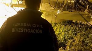 Un agente inspecciona una de las plantaciones.