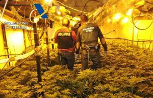 Agentes inspeccionan la plantación encontrada.