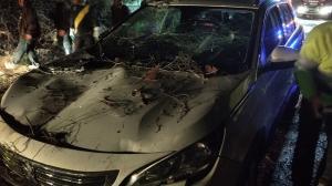 Estado del vehículo tras la caída del árbol.