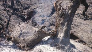 El incendio causó una gran devastación y arrasó el 80 por ciento del término de Lújar.