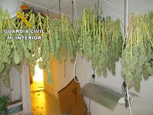 Una de las plantaciones descubiertas.