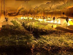 En la operación, la Policía Local ha intervenido casi 500 plantas, además de 4 kilos de cogollos.