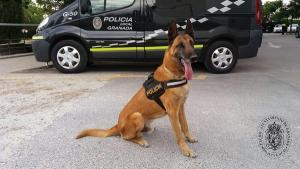 Junco se jubila tras más de una década en la Unidad Canina de la Policía Local de Granada.