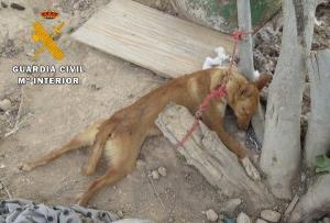 El animal, extenuado sin poder alcanzar el agua ni liberarse, murió estrangulado por la cuerda a la que estaba atado.