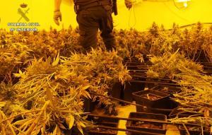 Marihuana descubierta en el polígono empresarial de Asegra.