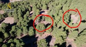 Imagen áerea de los cultivos de marihuana, señalados en rojo entre los pinos.