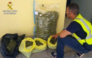 Marihuana requisada en Huétor Vega.