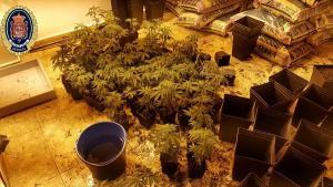 Marihuana y utensilios para su cultivo localizados en el piso.