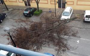 Un coche ha sufrido daños en el morro al caer sobre el vehículo un árbol por la acción del fuerte viento en la capital granadina.