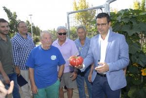 El alcalde con un tomate recolectado en un huerto urbano de La Chana.