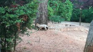 El zorro, de paseo por la Alhambra.