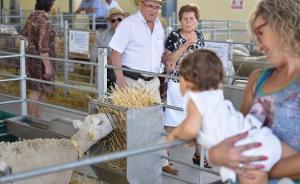 El cordero segureño, uno de los activos más importantes de la comarca.